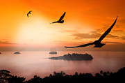 Heaven Digital Art Originals - Seagull hover by Anek Suwannaphoom
