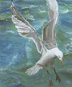 Sea Birds Pastels Framed Prints - Seagull Framed Print by Jim Barber Hove