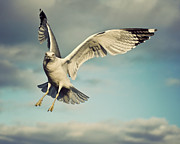 Flying Seagull Art - Seagull by Jody Trappe Photography