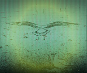 Morphed Photo Prints - Seagull Landing Print by Judith Szantyr