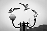 Duluth Art - Seagull Landing Pattern by Shutter Happens Photography