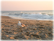 Seagull Pyrography Metal Prints - Seagull of Bethany Metal Print by Penny Johnson