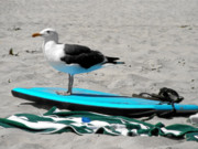 Coastal Birds Posters - Seagull on a Surfboard Poster by Christine Till