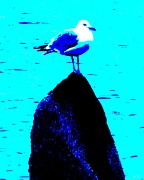 Bird At Sea Photos - Seagull Scout by Rene Crystal