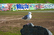Seagull Pyrography Metal Prints - Seagull Metal Print by Shawn Hegan