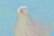 Seagull Mixed Media Metal Prints - Seagull Soft Art Metal Print by Deborah Benoit