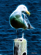 Flying Gull Posters - Seagull Poster by Stephen Younts
