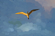 Flying Seagull Painting Framed Prints - Seagull Sunrise Framed Print by Miguel Pumarejo