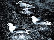 Inquisitive Prints - Seagull Trio Print by Will Borden