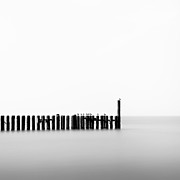 Perched Photos - Seagulls and Groynes by David Bowman