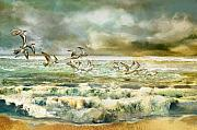 Coast Mixed Media Metal Prints - Seagulls at sea Metal Print by Anne Weirich