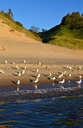 Seagulls At The Bowl Print by Michelle Calkins