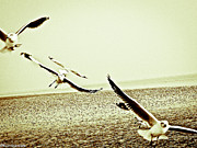 Kornrawiee Miu Miu Metal Prints - Seagulls beneath the wings Metal Print by Kornrawiee Miu Miu