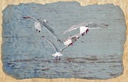 Sea Birds Framed Prints - Seagulls  Framed Print by Debra  Miller
