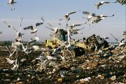 Bulldozers Framed Prints - Seagulls Feast On A Garbage Dump Framed Print by Melissa Farlow