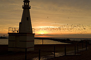 Colorful Cloud Formations Prints - Seagulls flying past lighthouse at sunset at lake front park in New Buffalo Michigan Print by Purcell Pictures
