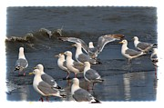 Birds Art - Seagulls Gathering by Debra  Miller