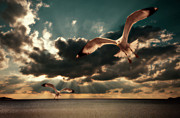 Seascape. Headland Posters - Seagulls In A Grunge Style Poster by Meirion Matthias
