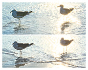 Seagull Pyrography Metal Prints - Seagulls in a Shimmer two views by Olivia Novak Metal Print by Olivia Novak