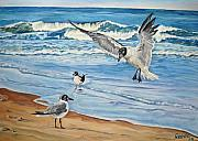 Relax Paintings - Seagulls by Jana Goode