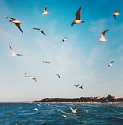 Flock Of Bird Art - Seagulls by Julia Davila-Lampe