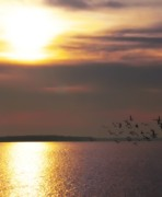 Sunset Photos - Seagulls on the Chesapeake by Bill Cannon