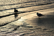 Sunset Seascape Pyrography Prints - Seagulls Silhouettes At Sunset Print by Valia Bradshaw