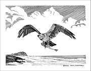 Pen And Ink Framed Prints Prints - Seahawk dinnertime Print by Jack Pumphrey