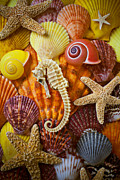 Seashells Posters - Seahorse and assorted sea shells Poster by Garry Gay