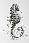 Sealife Art Drawings Posters - Seahorse  Poster by James Williamson