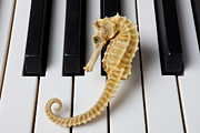 Keyboards Prints - Seahorse on keys Print by Garry Gay