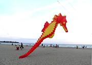 Kate Gallagher - Seahorse Visits Hampton Beach
