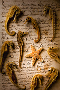 Sea Horse Posters - Seahorses and starfish on old letter Poster by Garry Gay