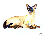 Sphynx Cat Paintings - Seal Point Siamese Cat old by Christy  Freeman