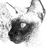 Pen And Ink Drawing Digital Art Metal Prints - Seal Point Sphynx Metal Print by Glennis Siverson