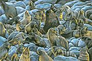 Resting Pastels Metal Prints - Seal Rock Metal Print by Sam Pearson