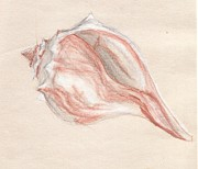 Seashell Drawings Metal Prints - Seashell 1 Metal Print by Agata Tajchert