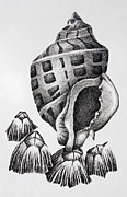 Seashell Drawings Metal Prints - Seashell and Barnacles Metal Print by James Williamson