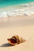 Sandy Posters - Seashell and ocean wave Poster by Elena Elisseeva