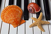 Keyboard Framed Prints - Seashell and starfish on piano Framed Print by Garry Gay
