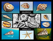 Shell Collection Framed Prints - Seashell Collection Framed Print by Kaye Menner