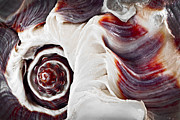 Pink Framed Prints - Seashell detail Framed Print by Elena Elisseeva