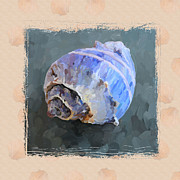Sea Shell Painting Prints - SeaShell III Grunge with Border Print by Jai Johnson