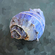 Sea Shell Painting Prints - SeaShell III Print by Jai Johnson