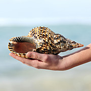 Sea Shell Posters - Seashell in hand Poster by Elena Elisseeva