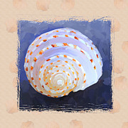 Sea Shell Painting Prints - SeaShell IV Grunge with Border Print by Jai Johnson