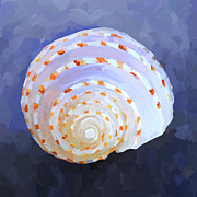 Seashell Art Metal Prints - SeaShell IV Metal Print by Jai Johnson