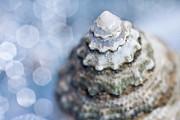 Seashell Print by Lauren Tolbert Miller
