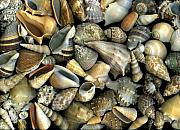 Beach Art Mixed Media Posters - Seashell Medley Poster by Christian Slanec