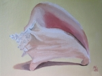 Shells Paintings - Seashell by Michael Holmes